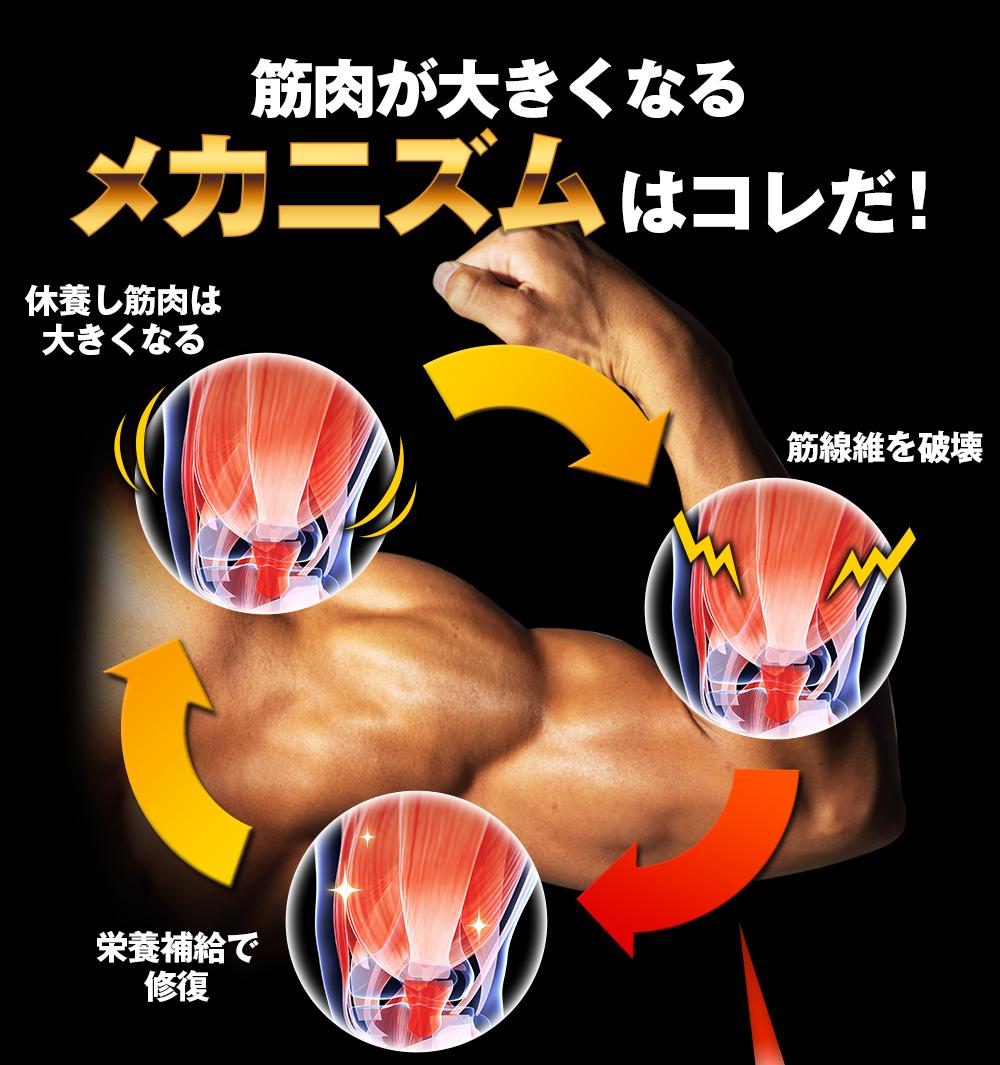 筋肉が大きくなるメカニズムはこれだ!