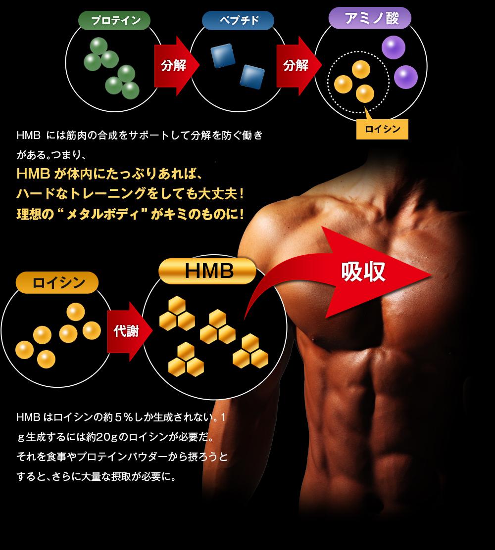 ダイレクトにHMBを摂ることが筋力アップの近道なのだ
