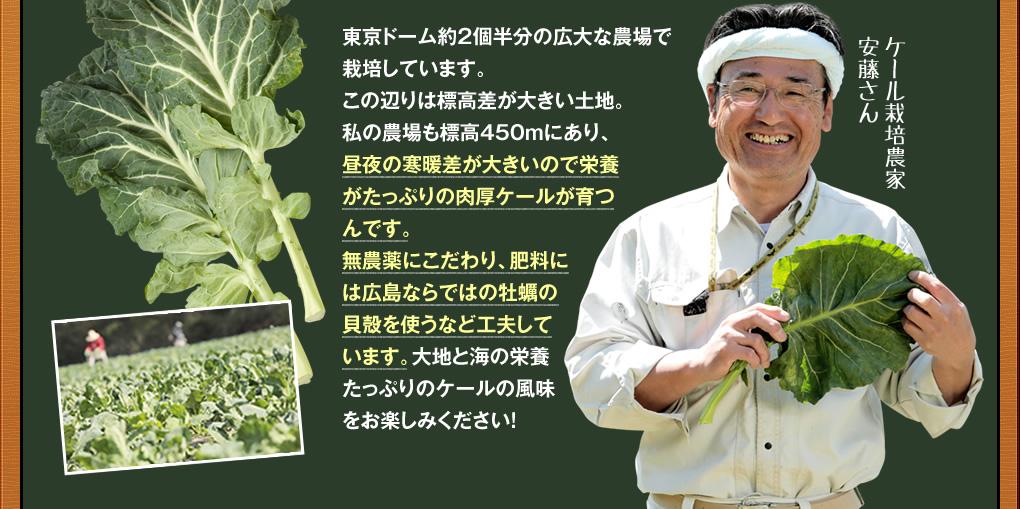 ケール栽培農家,安藤さん