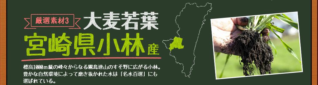 大麦若葉,宮崎県小林産