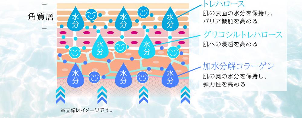 肌の表面の水分を保持するトレハロース、バリア機能を高めグリコシルトレハロース 肌への浸透を高める 肌の奥の水分を保持し、弾力性を高める加水分解コラーゲン